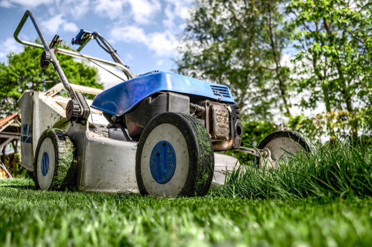 Reformas: ¿Cómo hacer un jardín en casa?
